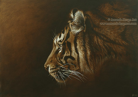"""""""Sumatran Tiger in Sepia"""" Limited Edition Print"""
