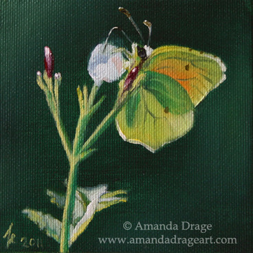 Brimstone Butterfly Miniature Painting