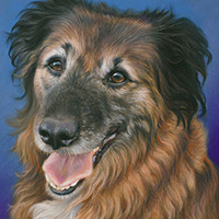 Portrait of a mixed breed dog by Amanda Drage Art
