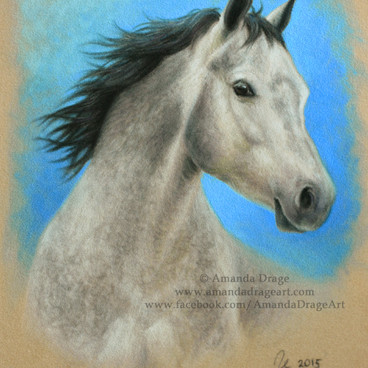 Dapple Grey Horse Pastel Portrait