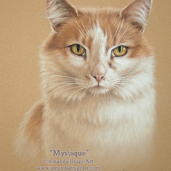 Ginger and White Cat Pastel Portrait