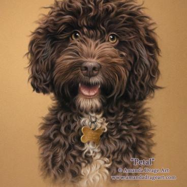 Chocolate Cockapoo Pastel Portrait
