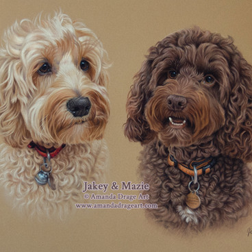 Gold and Chocolate Cockapoos Pastel Portrait