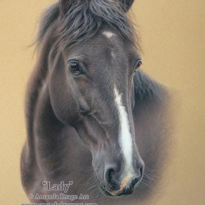 Black Horse Pastel Portrait