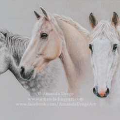 Dapple Grey and Palomino Horses Pastel Portrait