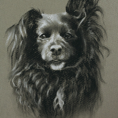 Black Dog Pencil Portrait