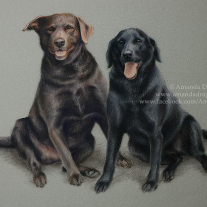 Black and Chocolate Labradors Pastel Portrait