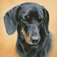 Portrait of a Dachshund by Amanda Drage Art