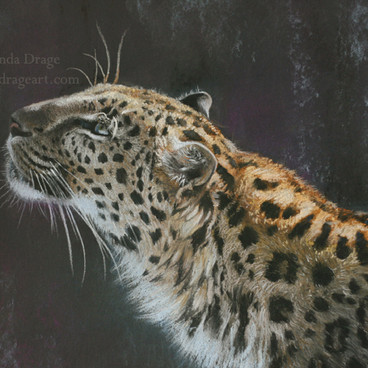 Leopard Pastel Drawing