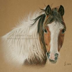 Paint Horse Pastel Portrait