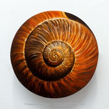 Snailshell 3 - Orange