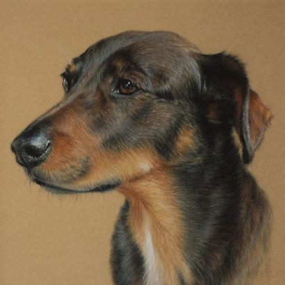 Mixed Breed Dog Pastel Portrait