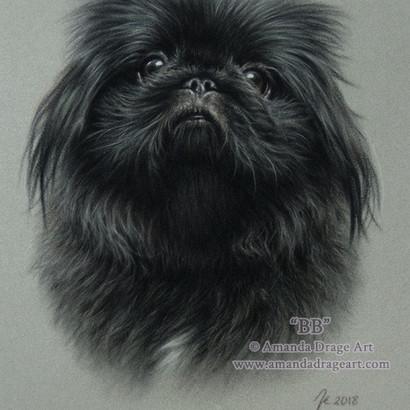 Pekingese Pastel Portrait