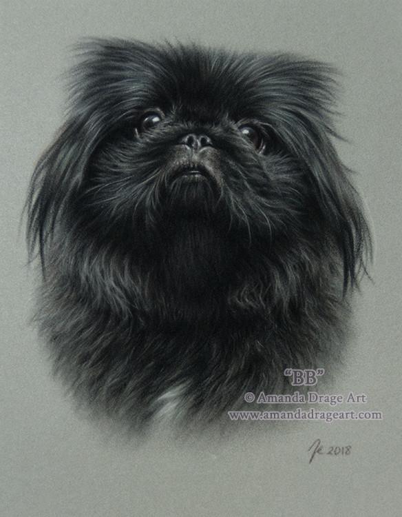 Pekingese Pastel Portrait on Light Grey Velour Paper