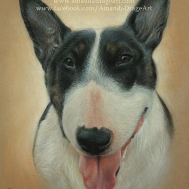 English Bull Terrier Pastel Portrait