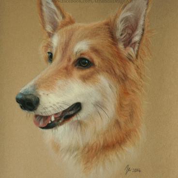 Collie x German Shepherd Pastel Portrait