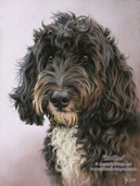 Cockapoo pastel portrait by Amanda Drage Art
