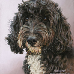 Black and White Cockapoo Pastel Portrait