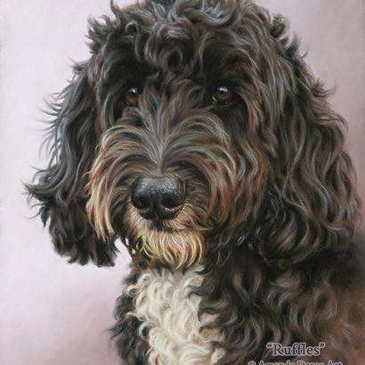 Black and White Cockapoo Pastel Portrait