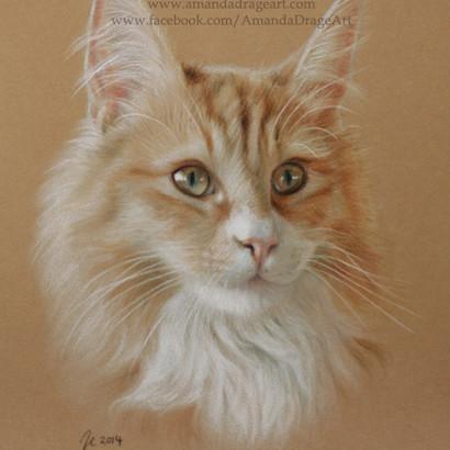 Maine Coon Cat Pastel Portrait