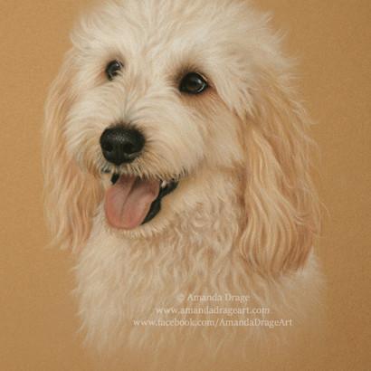 Golden Doodle Pastel Portrait