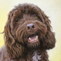 Portrait of a Cockapoo Dog by Amanda Drage Art