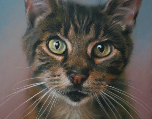 Tabby Cat Pastel Portrait on Sanded Paper