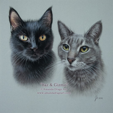 Black and Tabby Cats Pastel Portrait