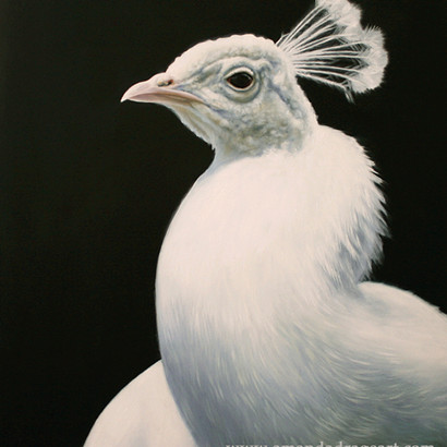 White Peacock Oil Painting