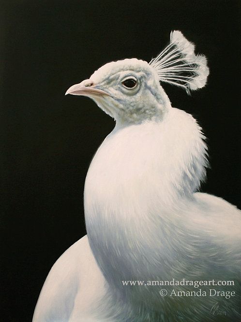 """""""Pearlescent"""" - White Peacock Print"""