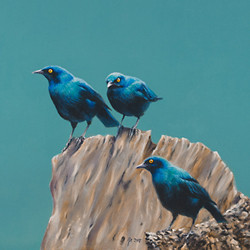 Painting of Cape Glossy Starlings by Amanda Drage Art