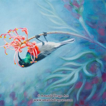 Sunbird Oil Painting
