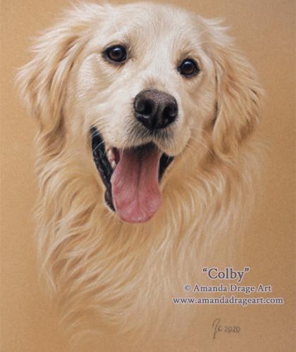 Golden Retriever Pastel Portrait on Tan Velour Paper