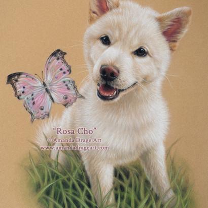 Japanese Shiba Inu Puppy Pastel Portrait