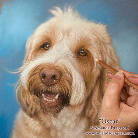 A pastel pet portrait in progress by Amanda Drage Art