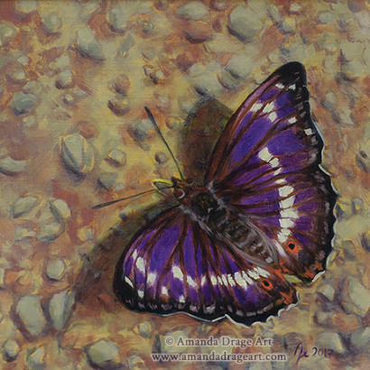Purple Emperor Butterfly Painting