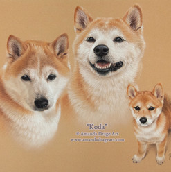 Japanese Shiba Inu Adult and Pup Pastel Portrait