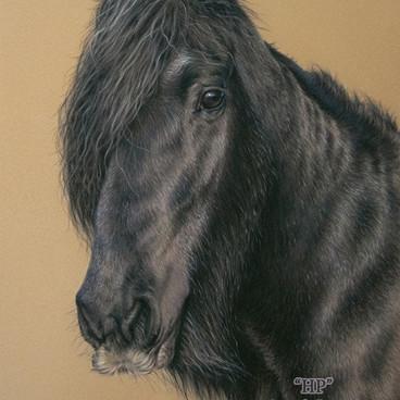 Black Cob Horse Pastel Portrait