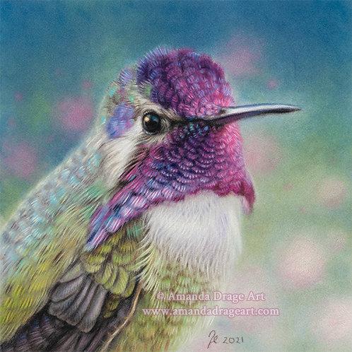 """""""Costa's Hummingbird"""" Limited Edition Mini Print"""