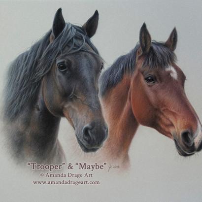 Bay Horses Pastel Portrait