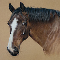 Portrait of a horse by Amanda Drage Art