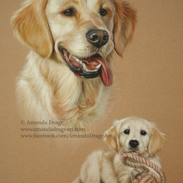 Golden Retriever Adult and Pup Pastel Portrait