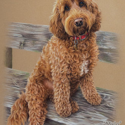 Red Gold Cockapoo Pastel Portrait