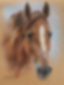 Horse pastel portrait by Amanda Drage Art