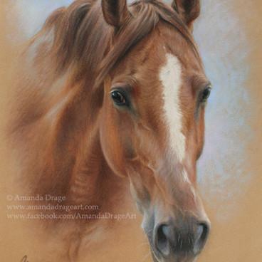 Chestnut Mare Pastel Portrait