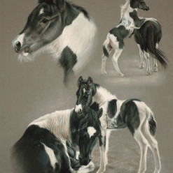 Paint Mare and Foal Pastel Portrait