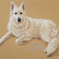 White German Shepherd Pastel Portrait