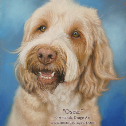 Golden Blonde Cockapoo Pastel Portrait