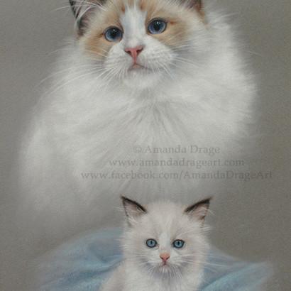Ragdoll Cat Adult and Kitten Pastel Portrait