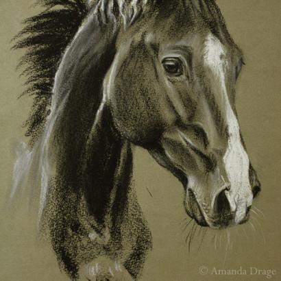 Horse Pencil Portrait